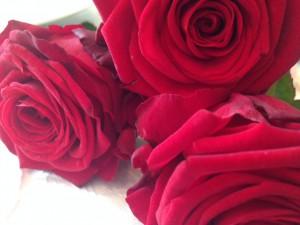 Rote Rosen - perfekt für den Valentinstag