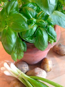 Basilikum, Frühlingszwiebel und Kartoffel