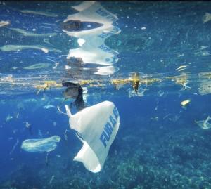 Plastikabfälle gefährden die Unterwasserwelt